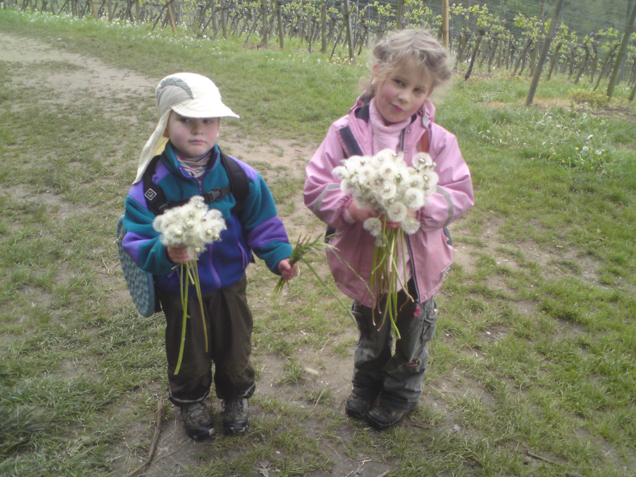 Ook in Duitsland wordt Moeder op moederdag met bloemen verwend. Een meisje plukt met haar broertje uitgebloeide paardebloemen tussen de wijngarden van Fürstenlager