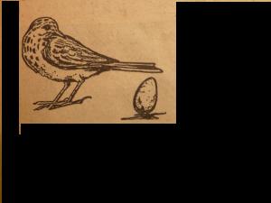 Het 'ei dat kon staan', tekening Piet Mulder (1947)